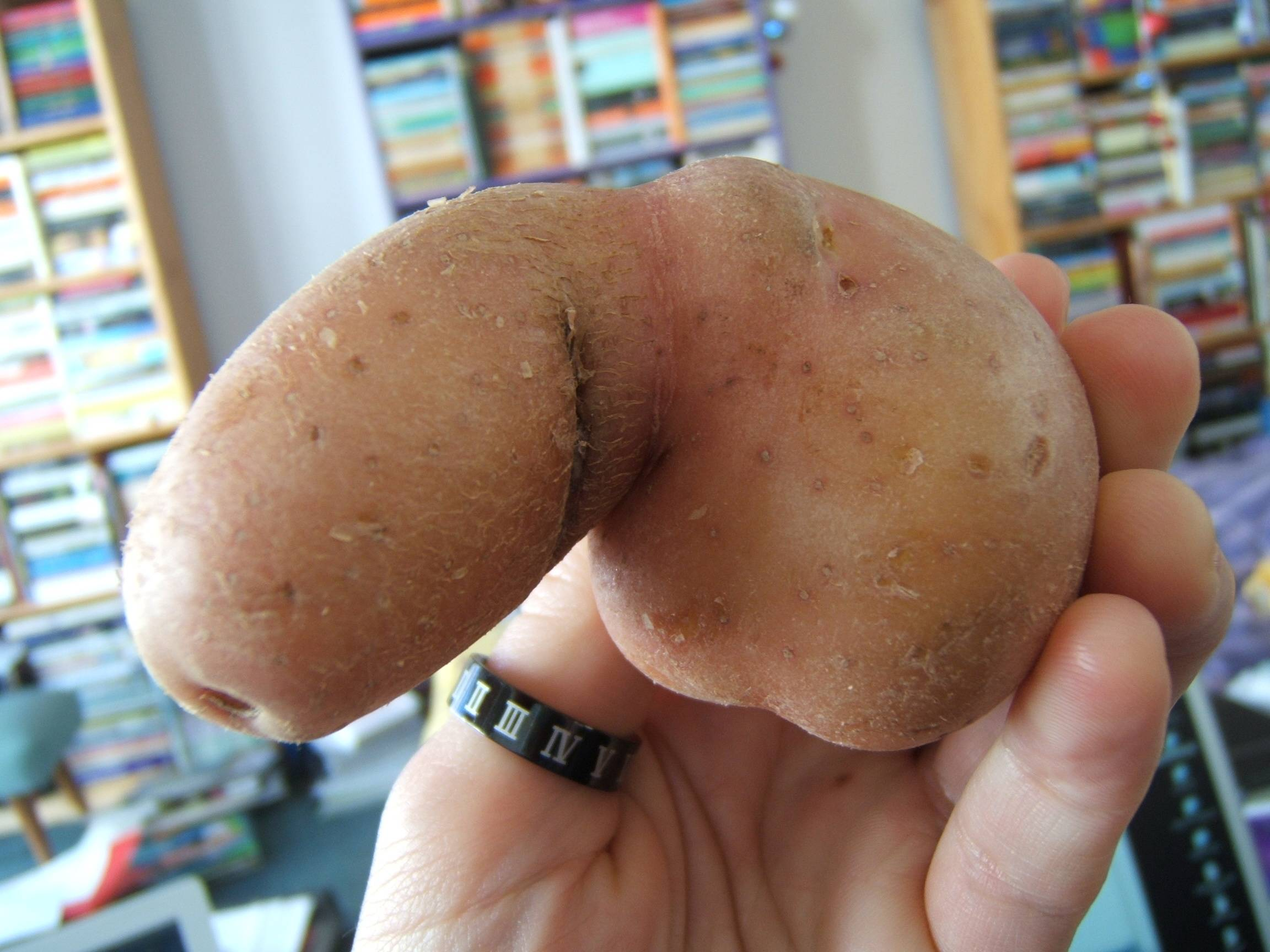 a potato that looks like a chode penis