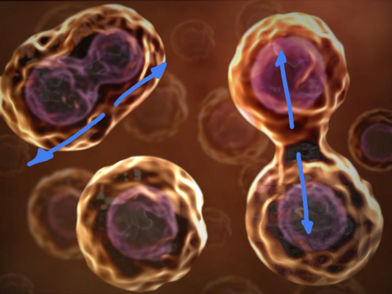 cell hyperplasia