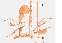 Diagram showing how to perform the bone-pressed length penis measurement.